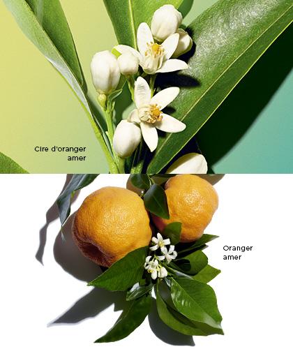 Cire d'oranger amer