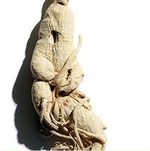 Ingrédient Ginseng
